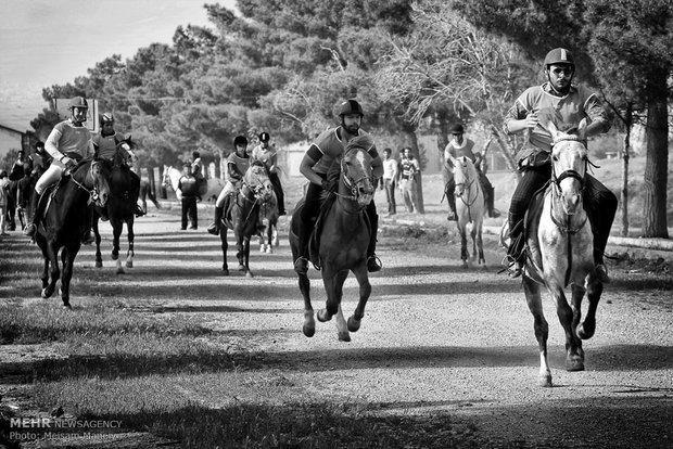 هفت باشگاه و مرکز پرورش اسب در همدان فعال است