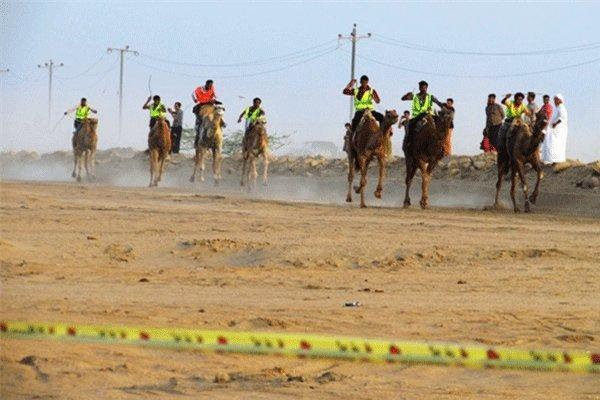 بهره برداری از پیست شترسواری و اسب دوانی جزیره قشم تا خاتمه سال جاری