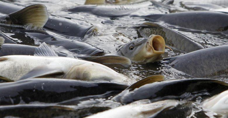 جهرم در صدر جدول فراوری ماهی گرم آبی