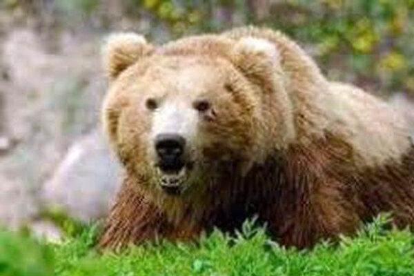 حمله خرس به کوهنورد ایلامی