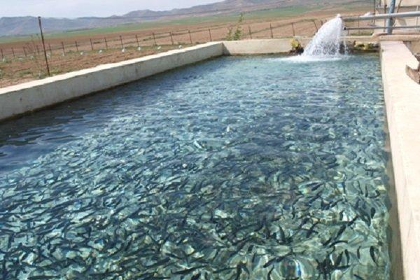 تخریب 75 هکتار حوضچه پرورش ماهی غیرمجاز در حوضه جراحی